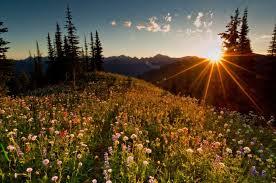 Sunshine meadow